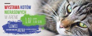 Gliwice: Wystawa Kotów Nierasowych @ Gliwice | śląskie | Polska