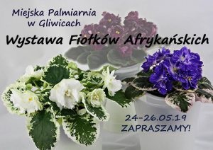 Palmiarnia Gliwice: I Kolekcjonerska Wystawa Fiołków Afrykańskich