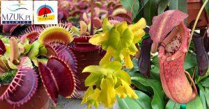 Palmiarnia Gliwice: Wystawa Roślin Mięsożernych