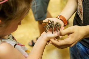 """Knurów: Wystawa """"Fascynujący świat pająków i skorpionów"""""""
