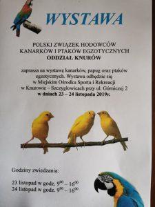 Knurów: Wystawa kanarków, papug oraz ptaków egzotycznych