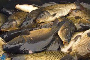 Knurów: Nocne zawody wędkarskie na Moczurach