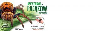 Gliwice: Wystawa pająków i skorpionów w Europie Centralnej