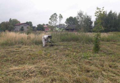 OSP Gierałtowice: usunięcie gniazd os