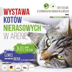 Arena Gliwice: Wystawa kotów nierasowych @ Gliwice | śląskie | Polska